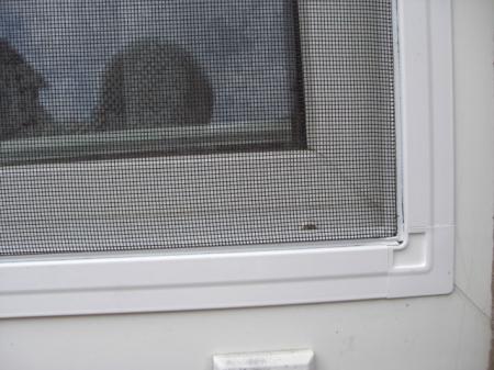fliegengitter bilder von kunden f r kunden. Black Bedroom Furniture Sets. Home Design Ideas